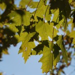 The Great Fall: LIGHT 2 © 2012 NATE METZ