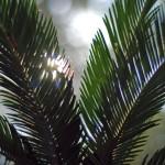 Translucent Study - Frame 5 © 2012 NATE METZ