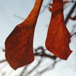Cold Fall Oak 1 © 2012 NATE METZ