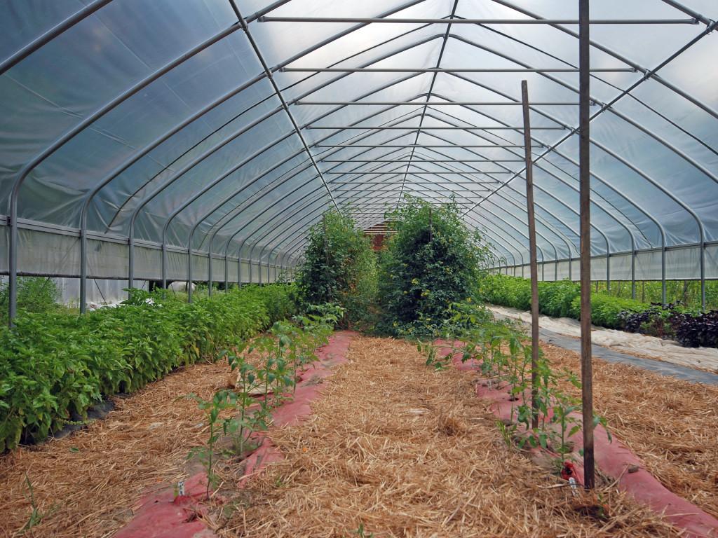 farm03_DSC_1127