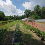 farm16_DSC_1157