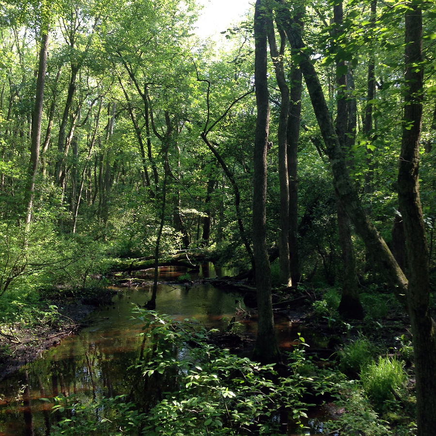 wetlandWalk-IMG_3453