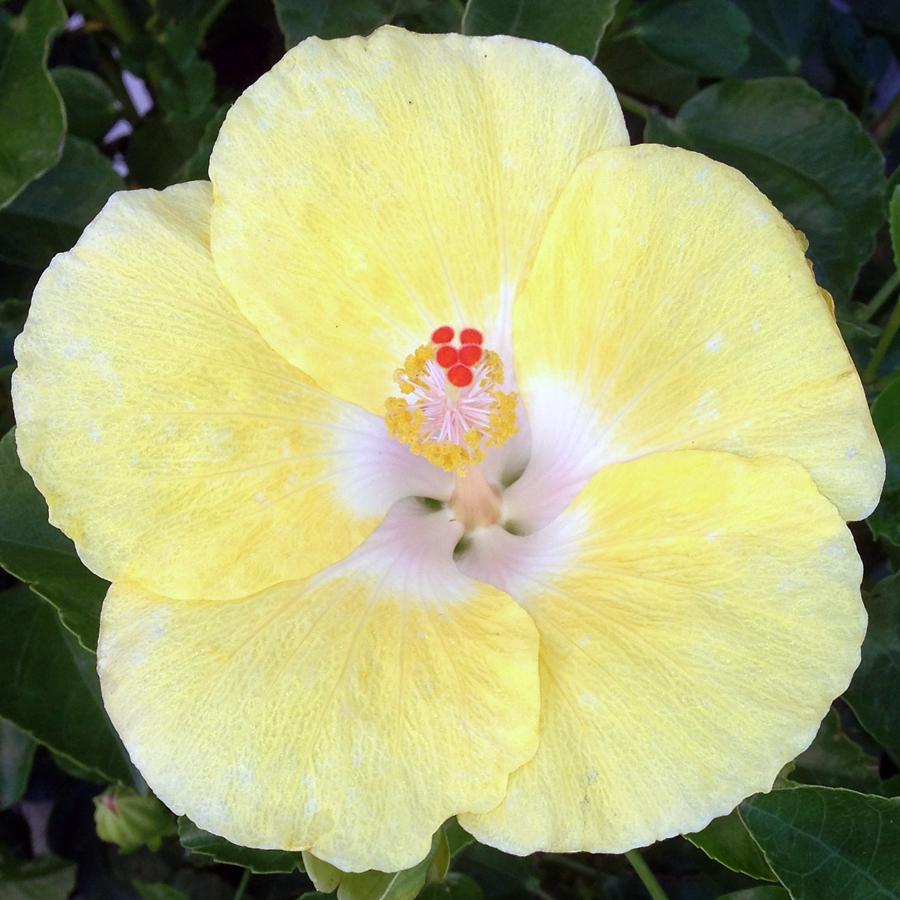 yellowPopIMG_3624