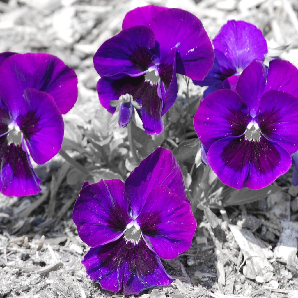 flower01DSC_1866