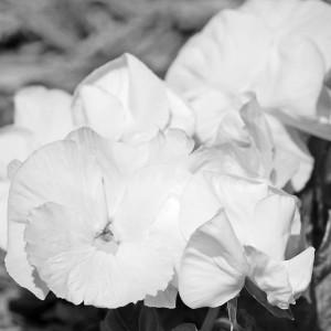flower02DSC_1869