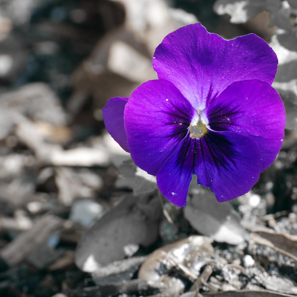 flower03DSC_1894