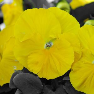 flower04DSC_1895