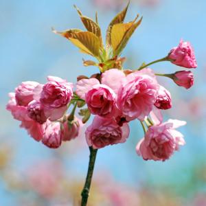 flower05DSC_1876