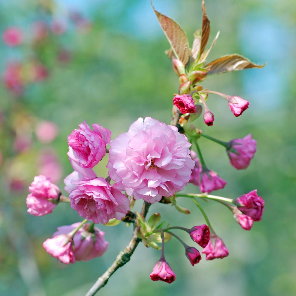 flower06DSC_1871