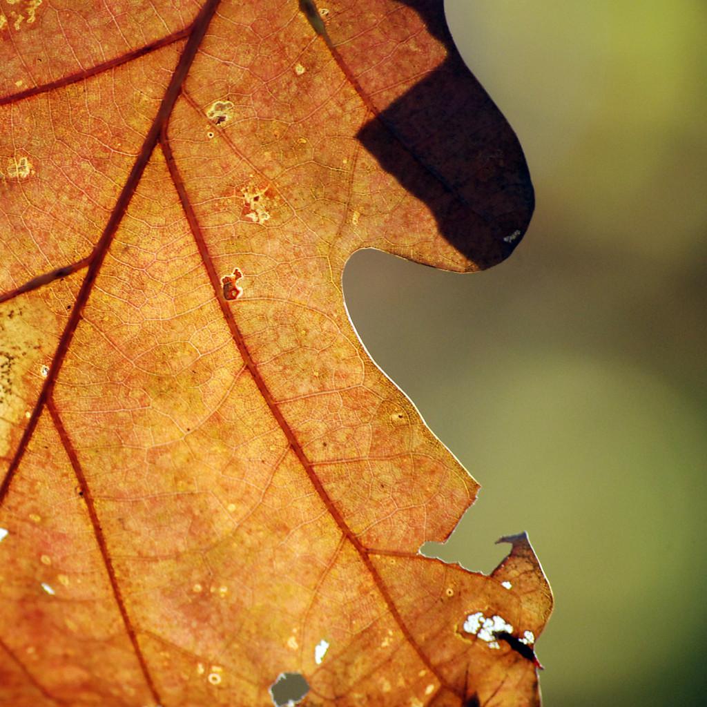 fall03DSC_2444