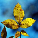 fall09DSC_2485