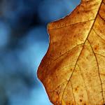 fall10DSC_2489