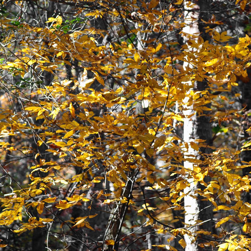 fall11DSC_2491