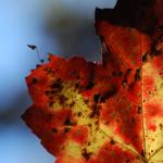 fall12DSC_2499