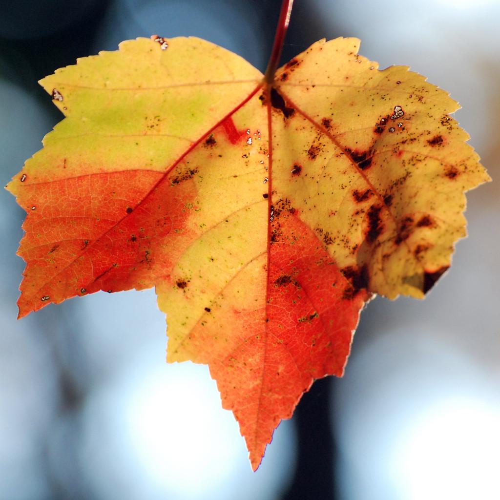 fall14DSC_2503