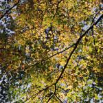 fall15DSC_2507