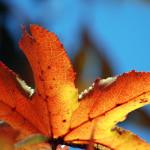 fall16DSC_2519